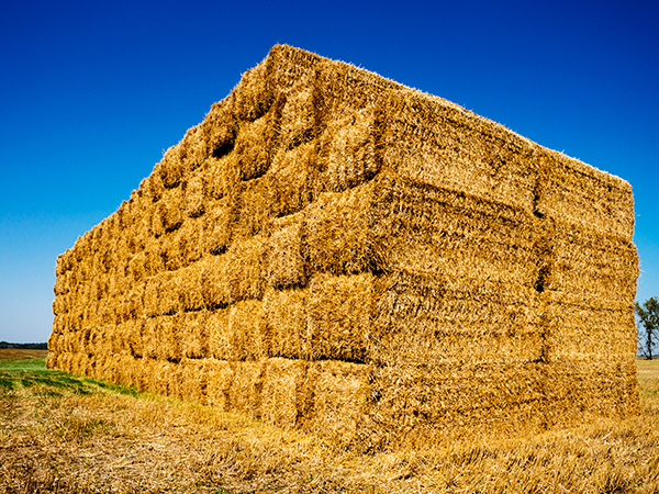 Hay stack in the field