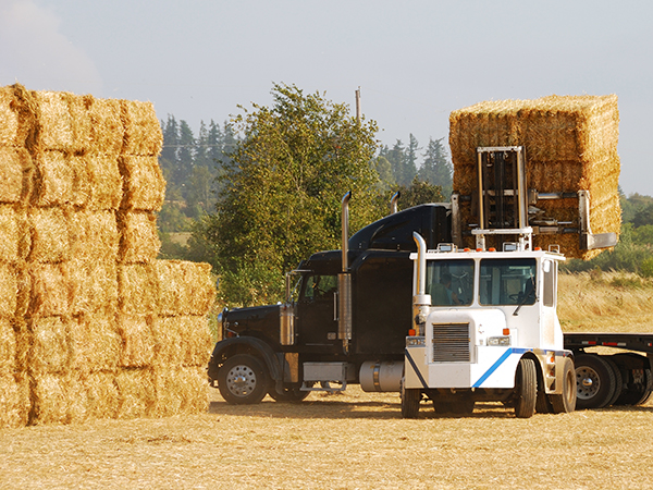 Loading a hay truck at the field